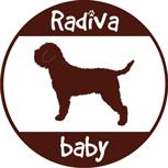 Lagotto Romagnolo - Radivababy